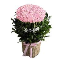 비누꽃 핑크100송이바구니