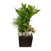 모듬식물 테이블형(30~50가량)